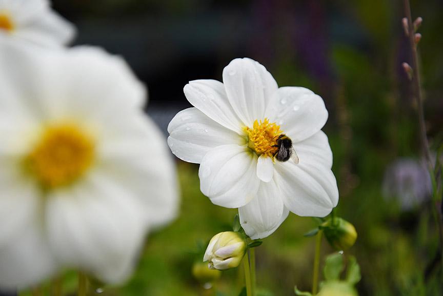 Middle Farm   Flower Sales