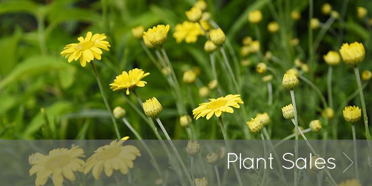 Middle Farm   Plant Sales